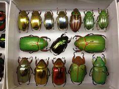 bugsscarabs.jpg (1600×1200)