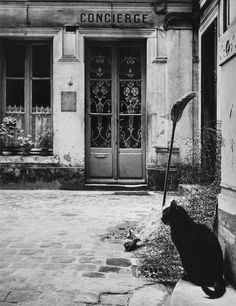 Cat from Paris, France