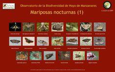 MARIPOSAS NOCTURNAS 1