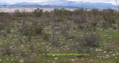 Flora de la Sierra de Guadarrama