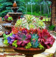succulents for outdoors - AOL Image Search Results