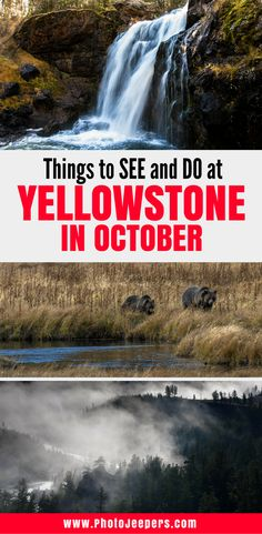 Imagine Visiting Yellowstone National Park When The Crowds Are Gone Animals Exhibit Interesting Behaviors And