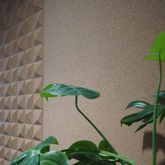 Plant Leaves, Wall, Plants, Walls, Plant, Planets