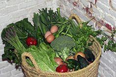 Recolección de hortalizas y verduras