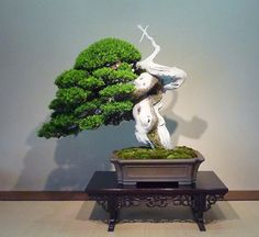 How About Yew? This rather spectacular, muscular Japanese yew resides at the Omiya Bonsai Art Museum in Saitama, Japan...