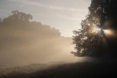 Richmond Park in the morning mist. - Richmond Park in the morning mist.