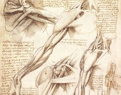 "RT @animalArnie: Leonardo Da Vinci's (""immorally"" obtained) ANATOMY drawings were used in universities for 400 yrs. #science #art https://t.co/VKx99GXm9e"