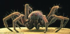 A common house spider