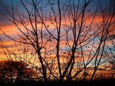 Tree Silhouette by ~I-am-Britta