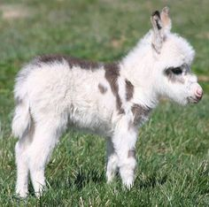 Cute baby donkey... - The Meta Picture