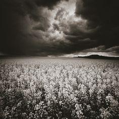 Nº 0197 - The End Of Paradise (Comes To Me Like A Storm) by Eduardo Almeida, art work Creative Photography, Fine Art Photography, Like A Storm, Black And White Photography, Surrealism, Like Me, Paradise, Spain, Clouds