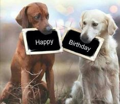 Pin on Feliz ano novo! Happy Birthday 1, Happy Birthday Images, Birthday Greetings, Birthday Cards, Facebook Birthday Wishes, Birthday Memes For Men, Birthday Posts, Happy New Year Dog, Happy B Day