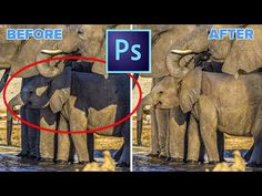 How to remove shadows from a photo in Photoshop. This photoshop tutorial shows how to easily get rid of shadows from a p Photoshop Express, Best Photoshop Actions, Photoshop Pics, Photoshop For Photographers, Photoshop Design, Photoshop Photography, Creative Photography, Photography Tips, Photoshop Website