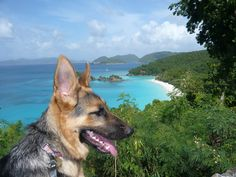Holiday in the Virgin Islands with Vacation Vistas. Fabulous St John vacation rentals, villa rentals and vacation property management in the US Virgin Islands, for over 24 years! Us Virgin Islands, This Is Us, Corgi, Villa, Vacation, Peaches, Animals, Sweet, Animales