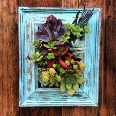 Vertical Framed Succulent Garden by SucculentWonderland on Etsy, $60.00