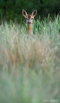 Roe Deer saw one just like this today :)
