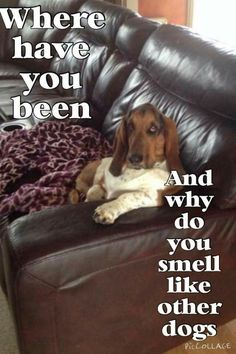 I've seen my oldest basset hound pose this way a thousand times.  She passed away last December and I miss her every day.  Her brother still entertains me...