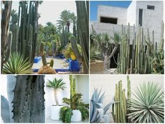 plants.005