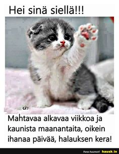 Hei sinä siellä!!! ... - HAUSK.in Learn Finnish, Le Pilates, School Quotes, Just For Laughs, Funny Texts, Trending Memes, Positive Quotes, Cute Pictures, Cat Lovers