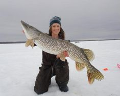 tips for icing northern Pike