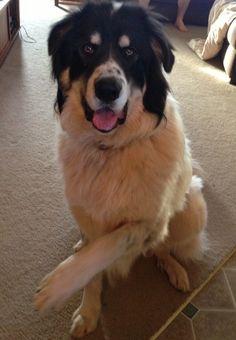 Huge Dog Big Paws Rescue