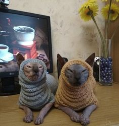 Sphynx Cat Clothes, Pet Clothes, Dog Clothing, Cute Hairless Cat, Cute Cats, Funny Cats, Sphinx Cat, Cat Sweaters, Cat Costumes