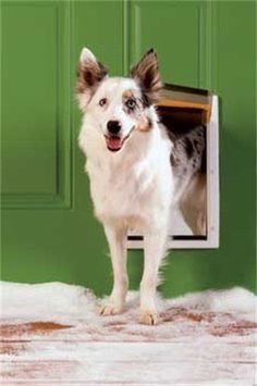 PetSafe Extreme Weather Pet Medium Size White Dog Door In Out House Home 3 Flap #PetAccess