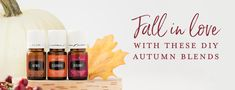 Fall in love with these DIY autumn blends Fall Essential Oils, Essential Oil Diffuser Blends, Young Living Essential Oils, Diffuser Recipes, Home Scents, Young Living Oils, Oil Bottle, Fall Diy, Chunky Sweaters