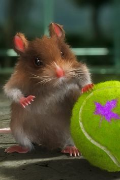 Hamster Tennis Ball Android Wallpaper HD Hd Wallpaper Android, Wallpapers, Tennis Wallpaper, Wallpaper Stores, Iphone 4s, Picture Quotes, Tennis Quotes, Animation, Iphone 4