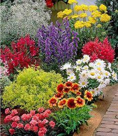 Skalka kvety a zahradating