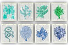 sea fan art, 8 illustrations sea fan sea grass coral gorgonian seaweeds ocean, beach cottage,coastal living decor, dictionary pages 8x10