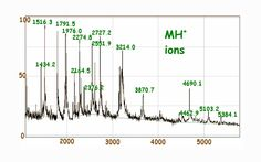 An Introduction to Mass Spectrometry