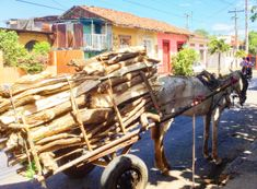 Horse and carriage in Leon South America, Horse, Beach, The Beach, Horses, Words