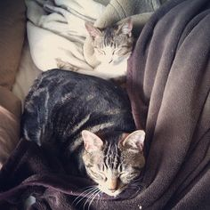 Very tired cats.