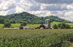 E poi arriva l'estate, il verde si diffonde con una sfacciataggine tale da convincerti che l'inverno, non ci sia mai stato. Wisconsin, West Salem, La Crosse, Farm Life, Fields, Westerns, Country Roads, Clouds, Sky