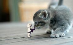 stormtrooper vs. cat by Kveldsvanger on DeviantArt