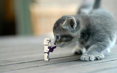 stormtrooper vs. cat by Kveldsvanger on DeviantArt