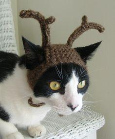 Reindeer kitty! Ahhhh, I wonder if my kitties would wear these...