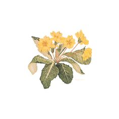 """Yellow Primrose - Limited Edition Lithograph 33"""" x 30"""" 