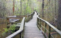 Congaree National Park   Most visitors to South Carolina's Congaree National Park come to walk along the Boardwalk Loop, a 4km trail that penetrates deep into the dark floodplain forest, which makes up the largest tract of old growth bottomland hardwood trees in the US. The park was named after the American Indian tribe who lived here until the 1700s, when they died out following a smallpox epidemic brought over by European settlers.