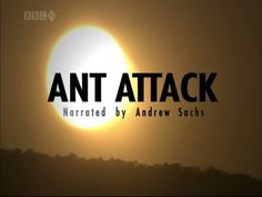 NATURAL WORLD ANT ATTACK (Full Documentary) - YouTube