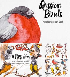 Watercolor russian birds set