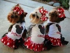 Yorkies. So cute!