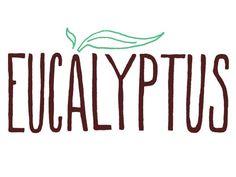 100 Best Supplements For Women: Eucalyptus http://www.prevention.com/mind-body/natural-remedies/100-best-supplements-women?s=40