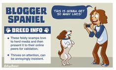 7 breeds of Dog people -BLOGGER SPANIEL