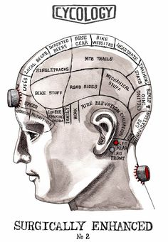 Phrenology of a Mountain Biker's head -with handy inserted front and rear lights.