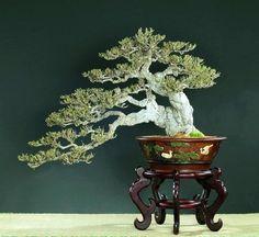 Bonsai Art, Bonsai Plants, Bonsai Garden, Bonsai Styles, Japanese Art, Japanese Gardens, Miniature Plants, Growing Tree, Small Trees