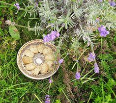 Mia's Glutenfreie Gaumenfreuden: Glutenfreie Lavendel-Kokosplätzchen