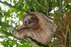 Animal Sex: How Sloths Do It http://whtc.co/5k7w