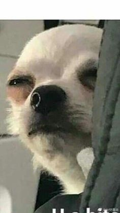 50 ideas memes funny faces pets for 2019 Memes Funny Faces, Funny Dog Memes, Cartoon Memes, Cat Memes, Funny Dogs, Cute Dogs, Funny Quotes, Cute Animal Memes, Animal Jokes